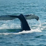 The consequences of skimping on website security services are widely understood. Businesses should give as much attention to executive cybersecurity. After all, the consequences of a whaling attack can be devastating.